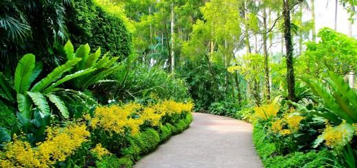 singapur-botanic-gardens-sad-4194