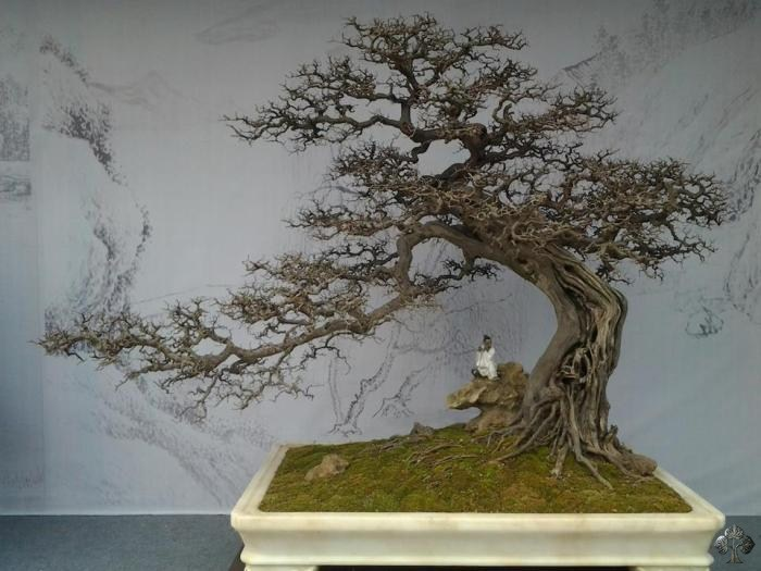 Chinese Penjing landscape with figurine, by Matyie Che Makhtar. Credit: http://www.bonsaiempire.com/inspiration/top-10/chinese-penjing
