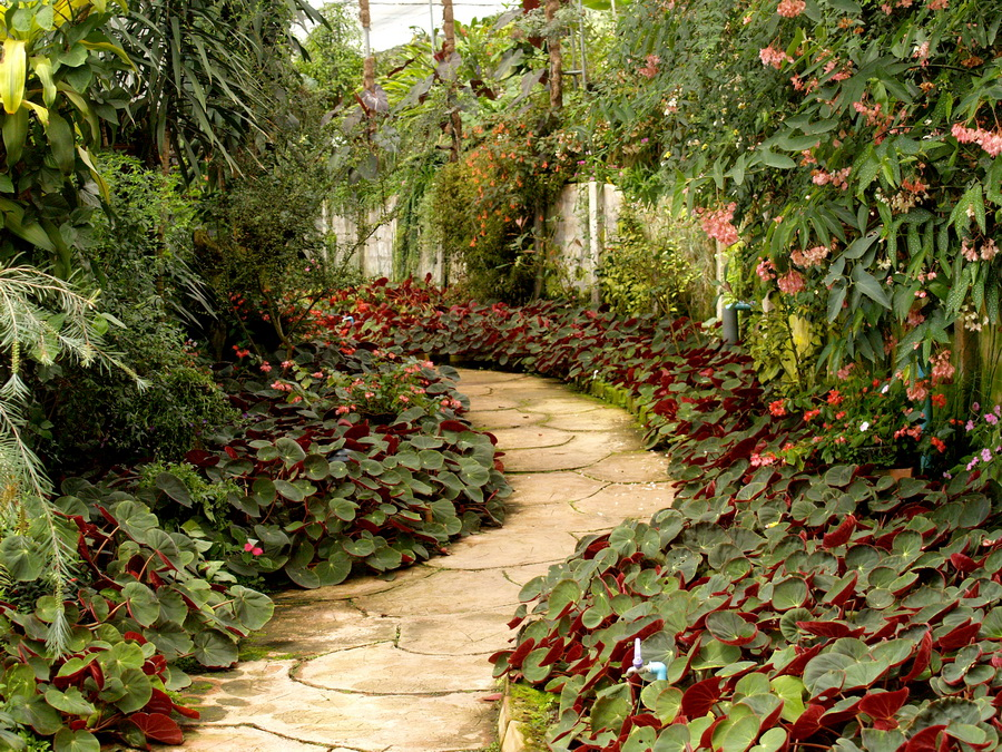 Colourful  Pathway plant in  Garden
