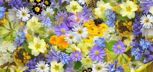 spring-flowers-flowers-collage-floral-68507