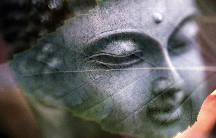 tree-plant-photography-leaf-statue-peace-641372-pxhere.com