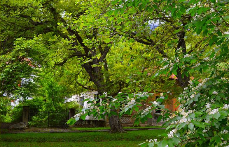 001-002 ต้นไม้โตเร็วเกินไป กิ่งเปราะ
