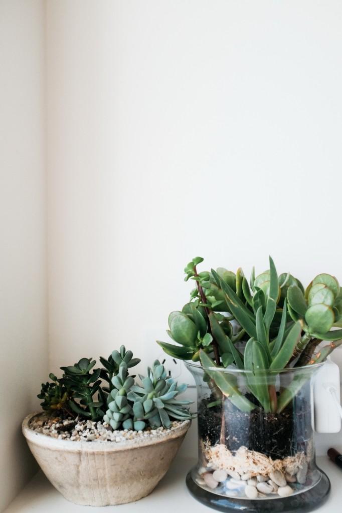 decoration-houseplant-plants-1845290